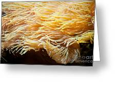 Yellow Sea Anemones Macro Greeting Card