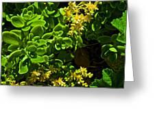 Yellow Sedum At Pilgrim Place In Claremont-california Greeting Card