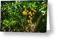 Yellow Seeds Greeting Card
