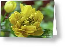 Yellow Shy Greeting Card