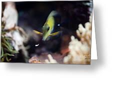 Yellow Spotted Aquarium Fish Greeting Card