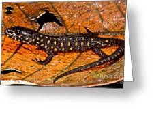 Yellow Spotted Tropical Night Lizard Greeting Card