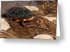 Yellow-spotted Turtle Crawling Through Wetland Greeting Card