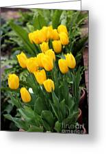 Yellow Spring Tulips Greeting Card