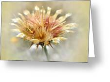 Yellow Star Thistle Greeting Card