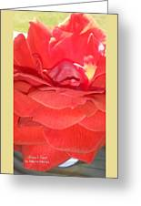 Yellow-striped Red Rose Greeting Card