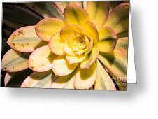 Yellow Succulent Greeting Card
