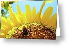 Yellow Sunflower Art Prints Bumble Bee Baslee Troutman Greeting Card