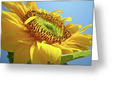 Yellow Sunflower Blue Sky Art Prints Baslee Troutman Greeting Card