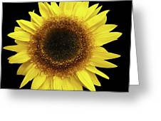 Yellow Sunflower Isolated On Black Background 8 Greeting Card