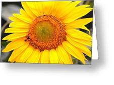 Yellow Sunflower With Bee Greeting Card