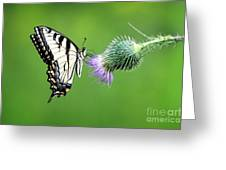 Yellow Swallow Tail 2 Greeting Card