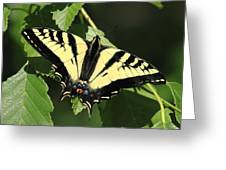 Yellow Swallow Tail Butterfly Greeting Card