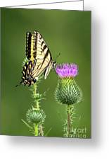 Yellow Swallow Tail Greeting Card