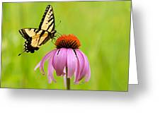 Yellow Swallowtail On Cone Flower Greeting Card