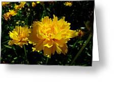 Yellow Symphony Greeting Card