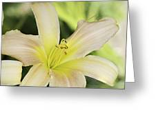 Yellow Tan Lily 1 Greeting Card by Roger Snyder