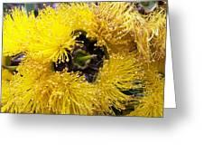 Yellow Tree Flower Greeting Card