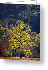 Yellow Tree In Sunlight Greeting Card