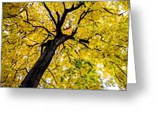 Yellow Tree Greeting Card