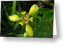 Yellow Triangle Greeting Card