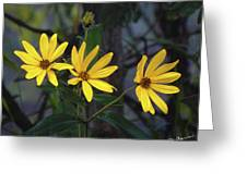 Yellow Trined Greeting Card