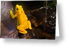 Yellow Tropical Frog Greeting Card