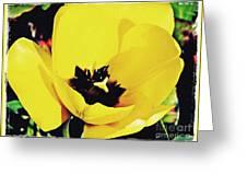 Yellow Tulip 2 Greeting Card