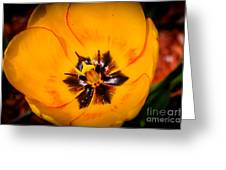 Yellow Tulip - Close Up Greeting Card