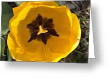 Yellow Tulip Head     Spring   Indiana Greeting Card