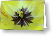 Yellow Tulip Macro Spring Floral Garden Baslee Troutman Greeting Card