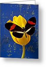 Yellow Tulip With Orange And Black Butterfly Greeting Card