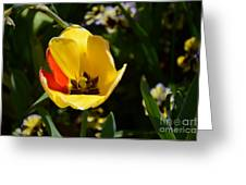 Yellow Tulip With Red Stripe Greeting Card