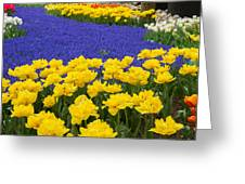 Yellow Tulips And Blue Muscari In Dutch Garden Greeting Card