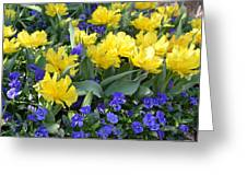Yellow Tulips And Violets Greeting Card