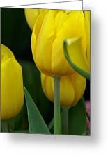 Yellow Tulips Greeting Card