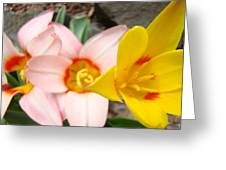 Yellow Tulips Art Prints Pink Tulips Spring Florals Baslee Troutman Greeting Card