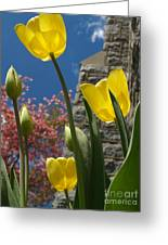 Yellow Tulips By Stone Church Greeting Card