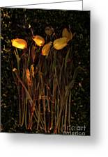Yellow Tulips Decaying At Sunset Greeting Card