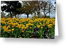 Yellow Tulips Of Fairhope Alabama Greeting Card