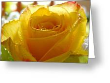 Yellow Valentine Roses - 4 Greeting Card