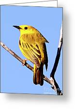 Yellow Warbler #2 Greeting Card