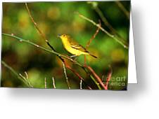 Yellow Warbler Galapagos Islands Greeting Card