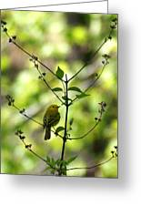 Yellow Warbler In A Tree 2 Greeting Card