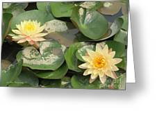 Yellow Water Lillies Greeting Card