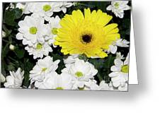 Yellow White Flowers Greeting Card
