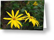 Yellow Wild Flower Greeting Card
