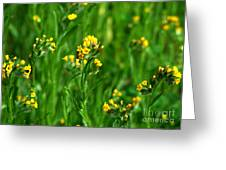 Yellow Wildflower Photograph Greeting Card