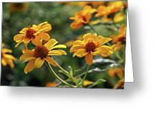 Yellow Wildflowers 3680 H_2 Greeting Card