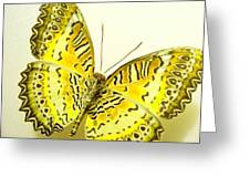 Yellow Wings In Gold Greeting Card